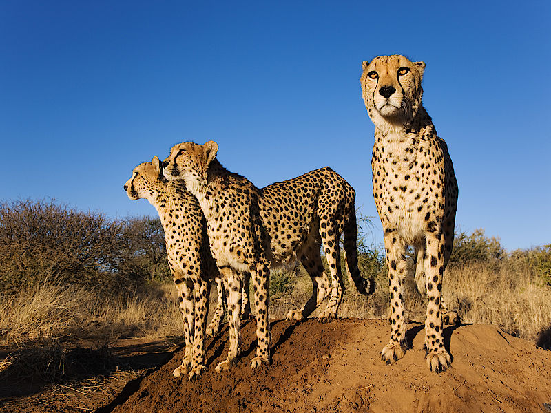 0csm_Namibia_Wildlife_Conservation_1_59a64d7646.jpg